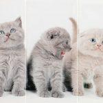 Set 3 canvas 30×60 three cats
