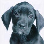 Set 3 canvas 25×25 dogs