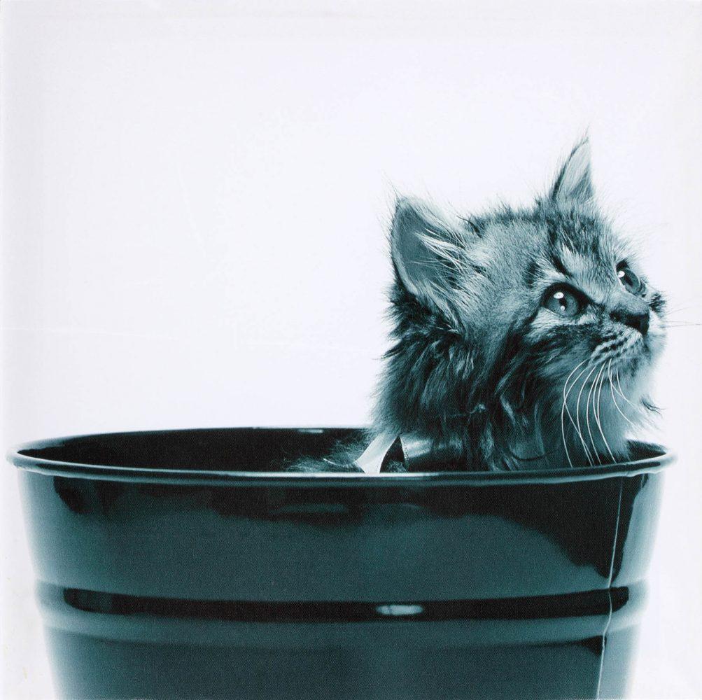 Canvas 40×40 cat