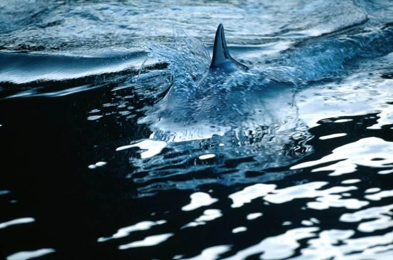 Glossy/fp03 100×150 dolphin