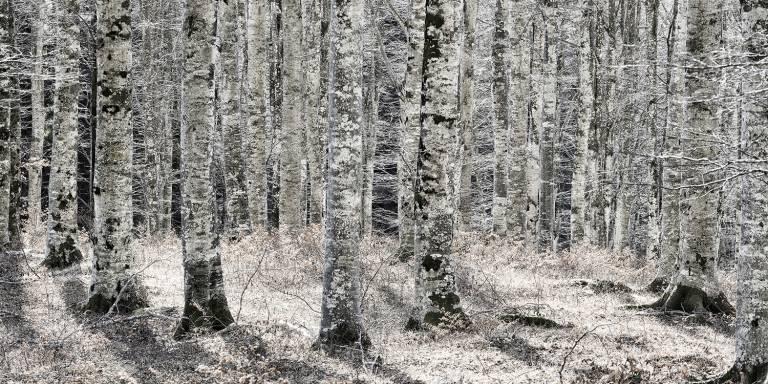 Glossy/ls05 100×200 birch wood